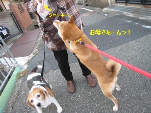 201411210106184ec.jpg