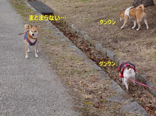 5思い思いのお散歩