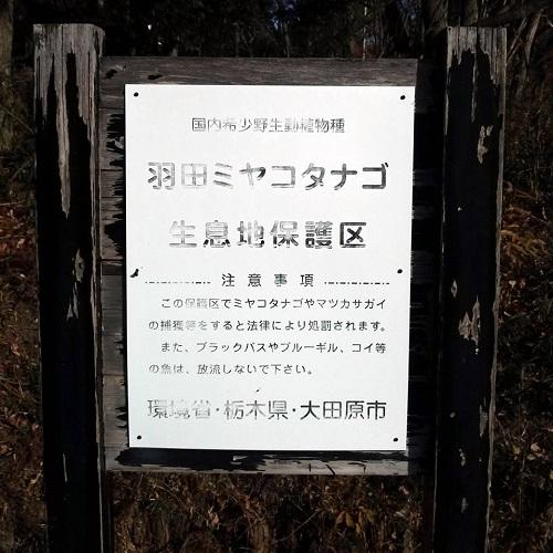 『羽田沼 野鳥公園』へ 再び!⑦