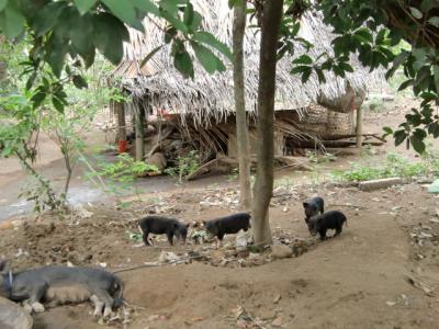 388豚_convert_20101229193519