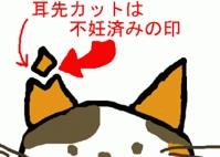 fc2blog_2013022815444266e.jpg