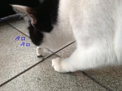 fc2blog_2013042621331698f.jpg