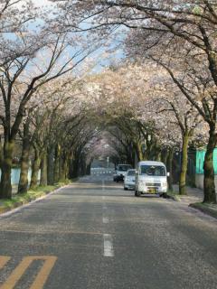葉桜_05