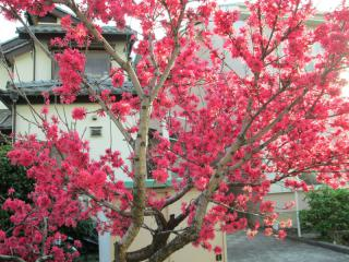 葉桜_04