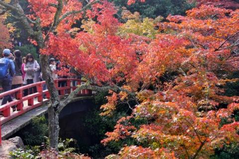miyajima131116017.jpg