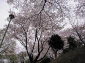 馬場町公園桜2010 2