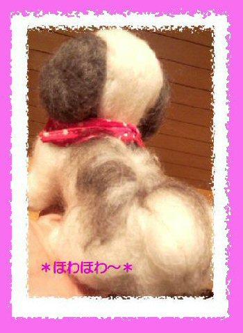 シーズーちゃん 女の子2