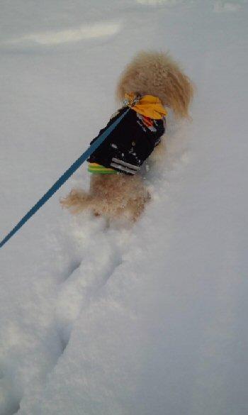 雪の中2013 3月その2