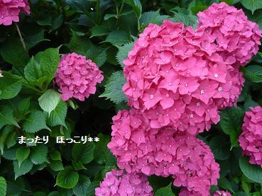 03_20110616083010.jpg