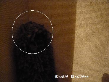 07_20110106125826.jpg